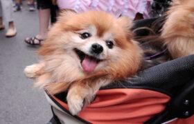 Según investigación hoy en Taiwán existen más mascotas que niños