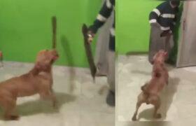 Increíble: Perro ataca a su dueño con un machete y se hace viral